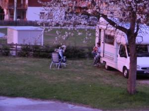 Abenddaemmerung-unter-Kirschblueten-