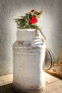 Milchkanne-als-Blumenvase-1